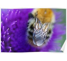 One Bee Poster