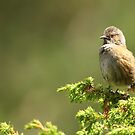 All Puffed Up by CBoyle