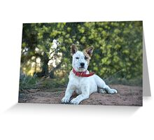 """Buster"" Greeting Card"