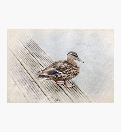 Queen Duck Photographic Print
