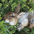 Found Objects #1, Rabbit by farmboy
