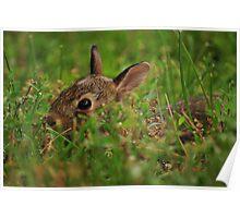 Little Bunny Fu Fu Poster