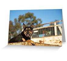 King Of The Kelpies & His Hilux Ute....... Greeting Card