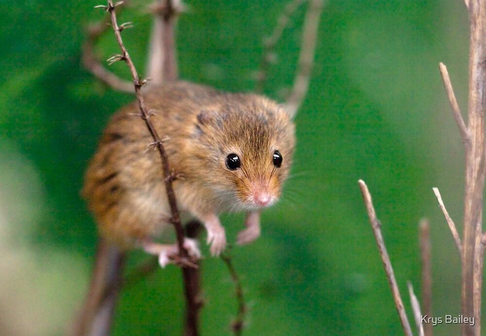 Mini-Mouse by Krys Bailey
