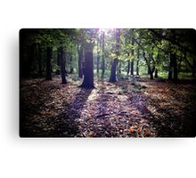 Woodland Sunshine Canvas Print