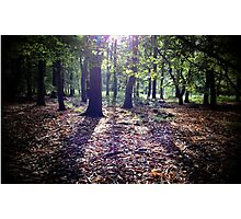 Woodland Sunshine Photographic Print