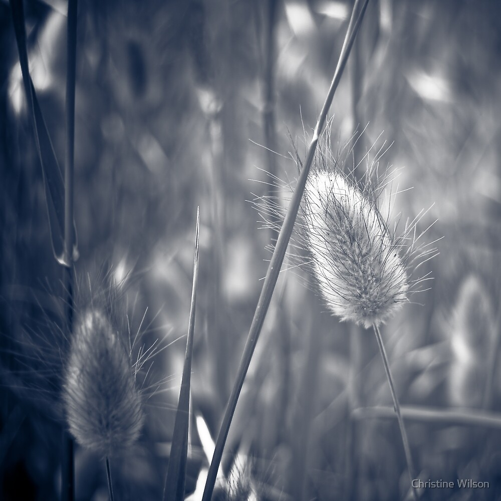 Amidst  the Grass  by Christine  Wilson Photography