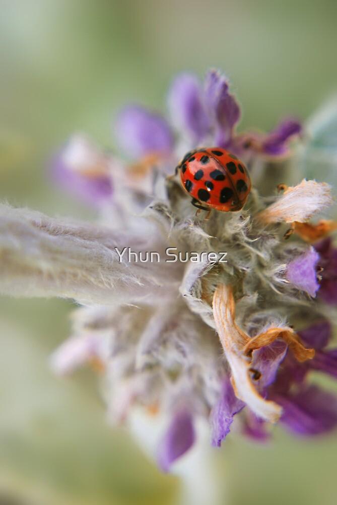 Scarlet & Spots by Yhun Suarez