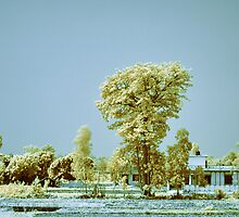 Haldwani by Prasad