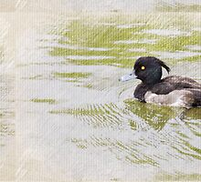 Tufted Duck by DeneWest