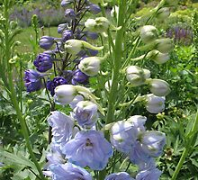 Blue Delphinium Days by MarianBendeth