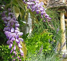 Wisteria and lavender by hjaynefoster