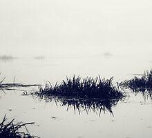 Fog over the river by Lenoirrr