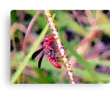 Reddish-brown Paper Wasp Canvas Print