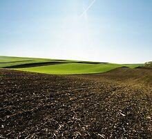 Spring field by smrcek