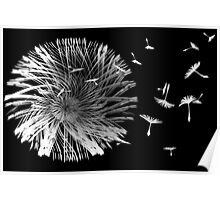 Dandelion Blowing in the Wind Poster