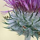 Lady Bug on a Thistle  by Corri Gryting Gutzman