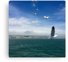 Seagulls over the Channel Canvas Print