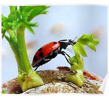 Ladybird Leap! Poster