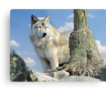 Watching Over the Pack Metal Print