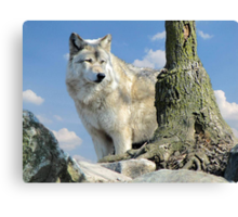 Watching Over the Pack Canvas Print