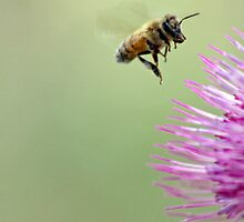 Don't Worry. Bee Happy. by Corri Gryting Gutzman