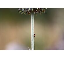 No One Can Say an Ant Can't -- Unframed Photographic Print