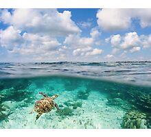 Over Under Shot, Green Sea Turtle Photographic Print