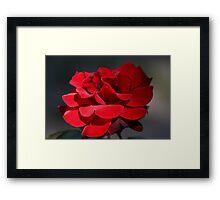 Red Rose 6411 Framed Print