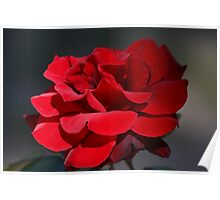 Red Rose 6411 Poster
