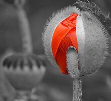 Burst of colour by SweetLemon