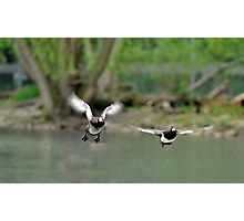 Goldeneye flight plan Photographic Print