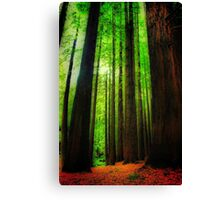 The Red Woods Forrest Canvas Print
