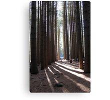 Sugar Pine Walk Canvas Print