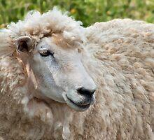 Ewe's Beautiful by Susie Peek