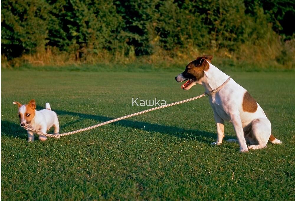 Walking the Dog by Kawka