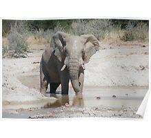 Ellie mud-pack Poster