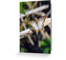 Irridescent gold, opel, Butterfly 191 Greeting Card