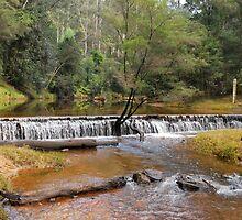 Wheeney Creek by Terry Everson