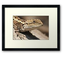 Jacky Dragon Framed Print