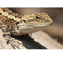 Jacky Dragon Photographic Print