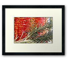 Heath Banskia Framed Print