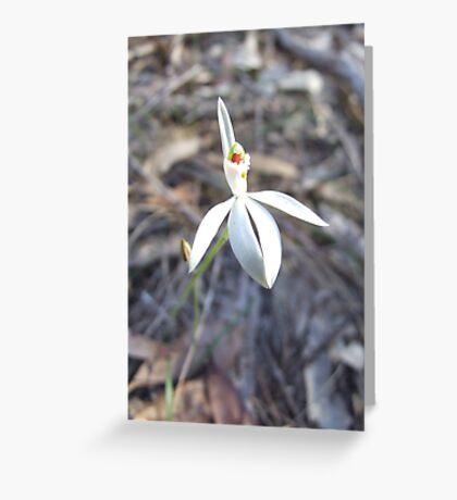 White Caladenia Greeting Card