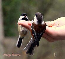 Hungry birds by marija pavlovic