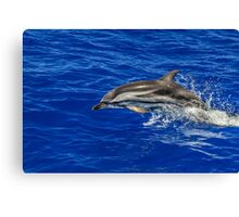 Wild free dolphin playing Canvas Print
