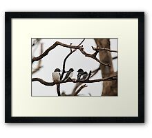 White-breasted Woodswallow Framed Print