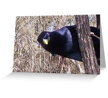 Satin Bowerbird Greeting Card