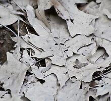 Mulch Leaves by Shadoe Huard