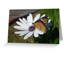 White Daisy and Butterfly Greeting Card
