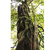 Twisted tree Photographic Print